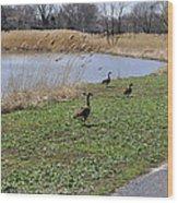 3 Geese Wood Print