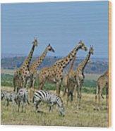 Girafe Masai Giraffa Camelopardalis Wood Print
