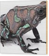 Golden Poison Dart Frog Wood Print