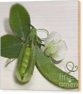 Green Peas In Pod With White Flower Wood Print
