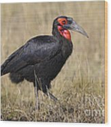 Ground Hornbill Wood Print