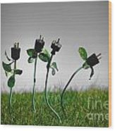 Growing Green Energy Wood Print by Amy Cicconi