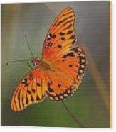 Gulf Fritillary Wood Print