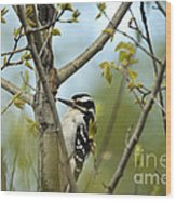 Hairy Woodpecker Wood Print by Linda Freshwaters Arndt