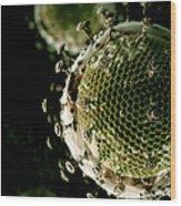 Hiv Wood Print