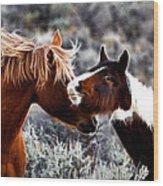 Horse Play Wood Print