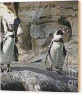 Humboldt Penguin Wood Print