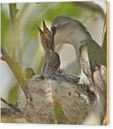 Hummingbird Babies Wood Print by Old Pueblo Photography