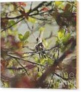 Hummingbird In Spring Wood Print