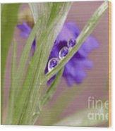 3 In A Row Reflection Rain Drops Wood Print