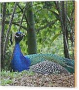 Indian Blue Peacock Wood Print