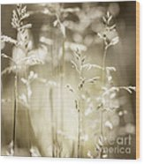 June Grass Flowering Wood Print
