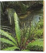 Jungle Stream Wood Print by Les Cunliffe