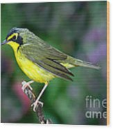 Kentucky Warbler Wood Print