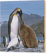 King Penguins Aptenodytes Patagonicus Wood Print by Hans Reinhard