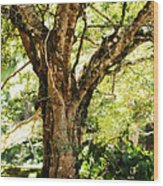 Kingdom Of The Trees. Peradeniya Botanical Garden. Sri Lanka Wood Print