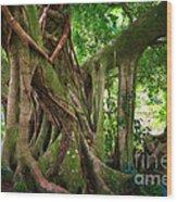 Kipahulu Banyan Tree Wood Print
