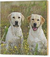 Labrador Retriever Dogs Wood Print