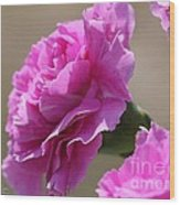 Lavender Carnations Wood Print