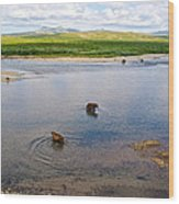 3-lay Of Land Grizzly Bears In Moraine River In Katmai National Preserve-ak Wood Print