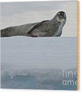 Leopard Seal Wood Print