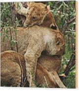 Lion Cubs On The Masai Mara  Wood Print