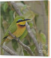 Little Bee-eater Wood Print