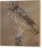 Little Owl Athene Noctua Wood Print