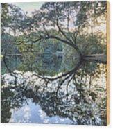 Live Oak Reflections Wood Print