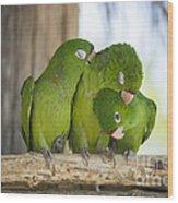 3 Love Birds -206 Wood Print
