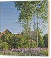 Maine Wild Lupine Flowers Wood Print