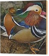Mandarin Duck Wood Print