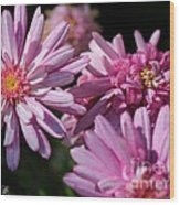 Marguerite Daisy Named Double Pink Wood Print