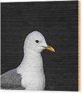 Mew Gull Wood Print