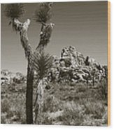 Joshua Tree National Park Landscape No 3 In Sepia Wood Print