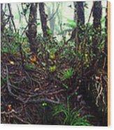 Misty Rainforest El Yunque Wood Print by Thomas R Fletcher
