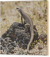 Mojave Desert Iguana Wood Print