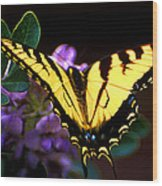 Monarch On Mountain Laurel Wood Print