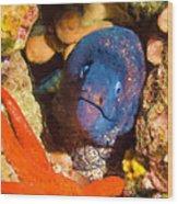 Moray Eel With Starfish Wood Print