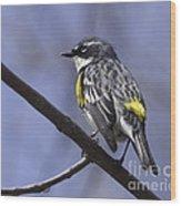 Myrtle Warbler Wood Print