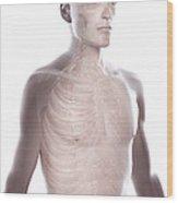 Nerves Of The Upper Body Wood Print