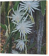 Night Blooming Cactus Wood Print