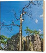 Old And Ancient Dry Tree On Top Of Mountain Wood Print
