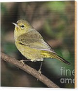 Orange-crowned Warbler Wood Print