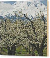 Orchard And Mount Hood, Oregon Wood Print