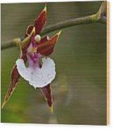 Orchid From Finca Dracula Wood Print