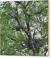 3 Owlets And Owl For Family Portrait Wood Print by Rebecca Adams