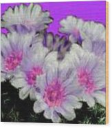 Painterly Cactus Flowers Wood Print