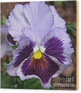 Pansy From The Chalon Supreme Primed Mix Wood Print