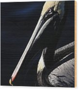 Pelican Profile Wood Print